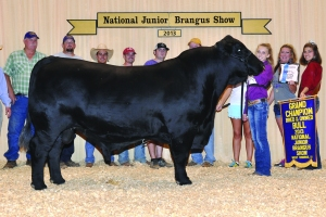 B&O Black Bull- Champ - Savannah Scott