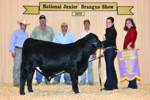 B&O Black Bull- Res Champ - Katy Knox