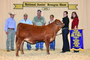 B&O Red Female- Champ - Katy Knox