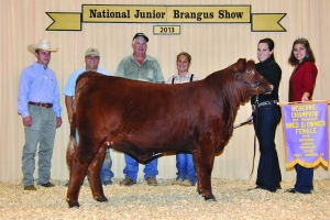 B&O Red Female- Res Champ - Katy Knox