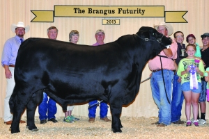 Futurity Black Bull- Res Champ - Buck Thomason