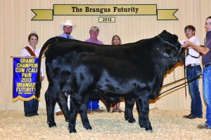 Futurity Black CC- Champ - Johnston