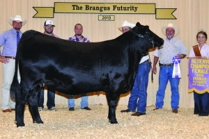 Futurity Black Female- Res Champ - Doguet