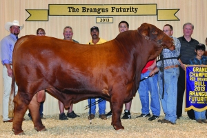 Futurity Red Bull- Champ - Cox