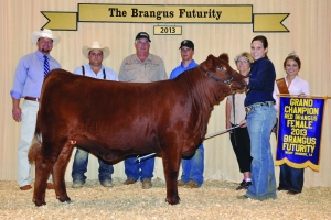 Futurity Red Female- Champ - Katy Knox