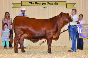Futurity Red Female- Res Champ - Bailye Foltyn