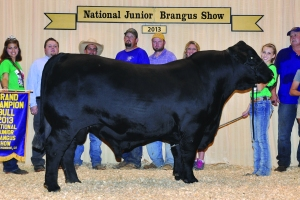 Owned Black Bull- Champ - Savannah Scott