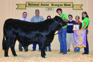 Owned Black Bull- Res Champ - Faul