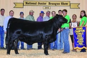 Owned Black Female- Champ - Johnston